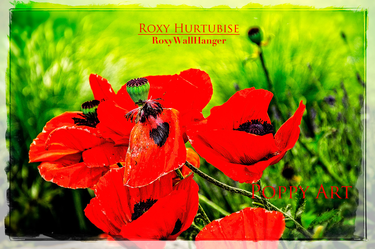 Poppy Art by Roxy Hurtubise