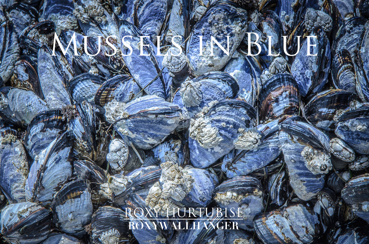 Mussels in Blue by Roxy Hurtubise