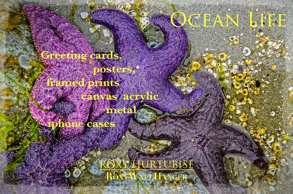 Starfish Cluster